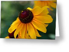 Black Eye Susan Greeting Card