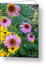 Black Eye Susans And Echinacea Greeting Card