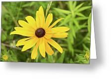 Black Eyed Susan IIi Greeting Card