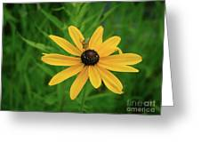 Black Eyed Susan And Friends Greeting Card