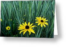Black Eyed Susan And Tall Grass Greeting Card