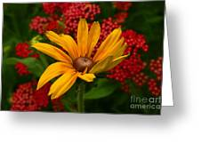 Black-eyed Susan And Yarrow Greeting Card