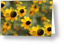 Black Eyed Susan Floral Greeting Card