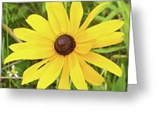 Black Eyed Susan II Greeting Card