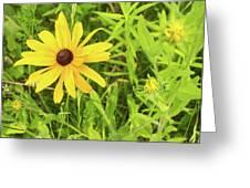 Black Eyed Susan Iv Greeting Card