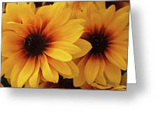 Black Eyed Susan Medley V2 Greeting Card