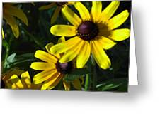 Black Eyed Susan Greeting Card