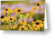 Black Eyed Susan Sunflowers In Field Greeting Card