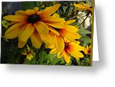 Black-eyed Susan Symphony Greeting Card