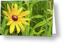 Black Eyed Susan V Greeting Card