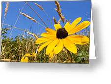 Black-eyed Susan With Grass Greeting Card