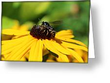 Black Eyed Susan With Wasp Greeting Card