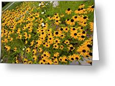 Black Eyed Susans-1 Greeting Card