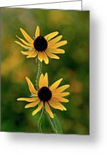 Black Eyed Susans 3276 H_2 Greeting Card