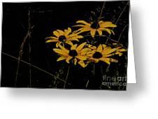 Black Eyed Susans At Dusk Greeting Card