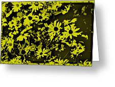 Black Eyed Susan's Greeting Card