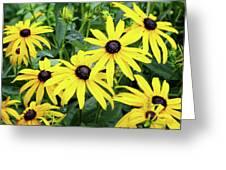 Black Eyed Susans- Fine Art Photograph By Linda Woods Greeting Card