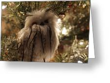 Black Feather Owl Greeting Card