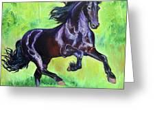 Black Friesian Horse Greeting Card