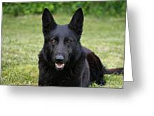 Black German Shepherd Dog II Greeting Card