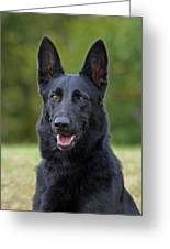 Black German Shepherd Dog Greeting Card