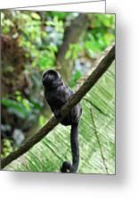 Black Goeldi's Marmoset Sitting On The Vine Greeting Card