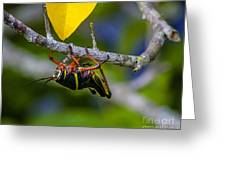 Black Grasshopper Greeting Card
