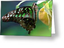 Black Green Tailed Jay 2 Greeting Card
