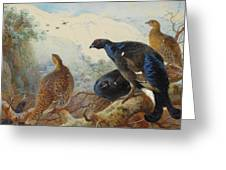 Black Grouse And Gamebirds By Thorburn Greeting Card