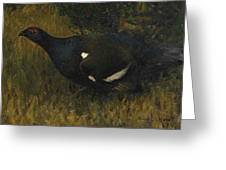 Black Grouse Cock Greeting Card