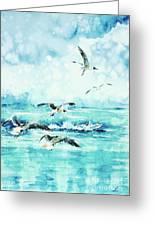 Black-headed Seagulls At Seven Seas Beach  Greeting Card