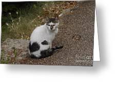 Black Heart Cat Greeting Card