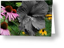 Black Hibiscus Greeting Card