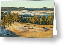 Black Hills Bison Before Sunset Greeting Card