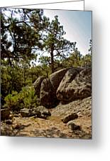 Black Hills II Greeting Card