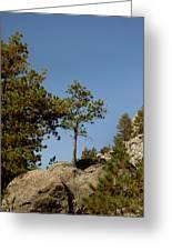 Black Hills Lone Tree Greeting Card