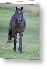Black Horse Greeting Card