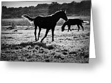 Black Horse. Greeting Card
