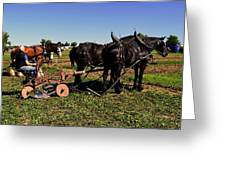 Black Horses With Sulky Plow Two  Greeting Card