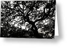 Black Jack Oak Greeting Card