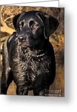 Black Labrador Retriever Dog Greeting Card