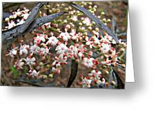 Black Lace Elderberry With Raindrops Greeting Card