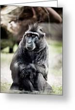 Black Macaque Monkey Sitting Greeting Card