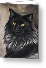 Black Maine Coon Greeting Card