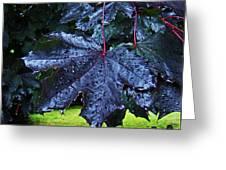 Black Maple Greeting Card