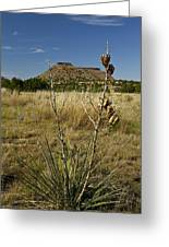 Black Mesa Cacti Greeting Card
