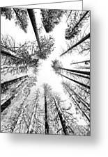 Black N White Sky-trees Greeting Card
