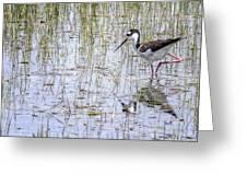 Black-necked Stilt, No. 2 Greeting Card