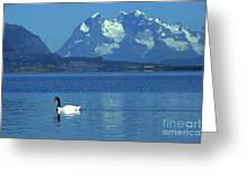 Black Necked Swan On Last Hope Sound Chile Greeting Card