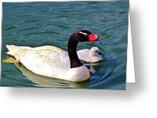 Black-necked Swan With Baby Greeting Card